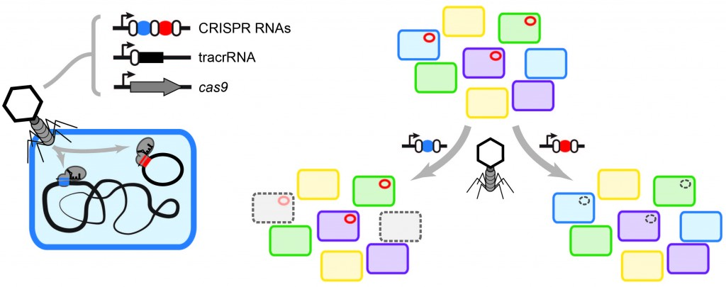 Genome Biol figure